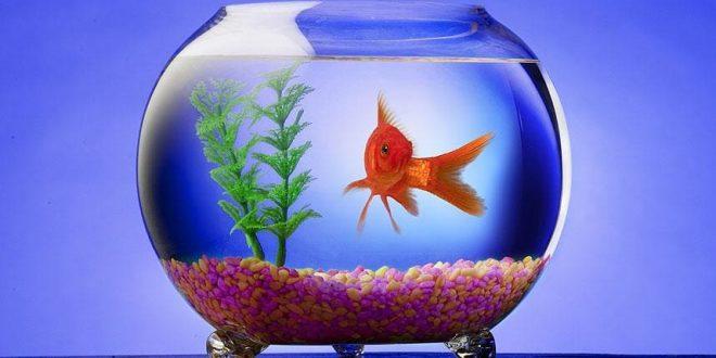 مدل تنگ ماهی عید